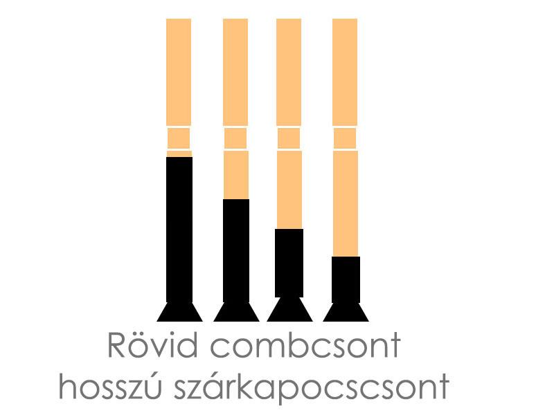 rovid-combcsont